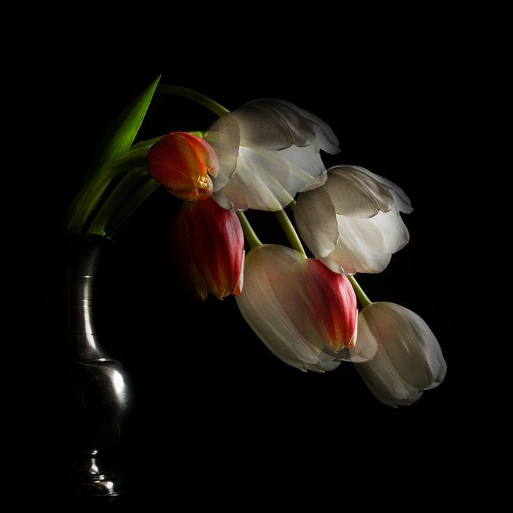 Tulpen Fantasien
