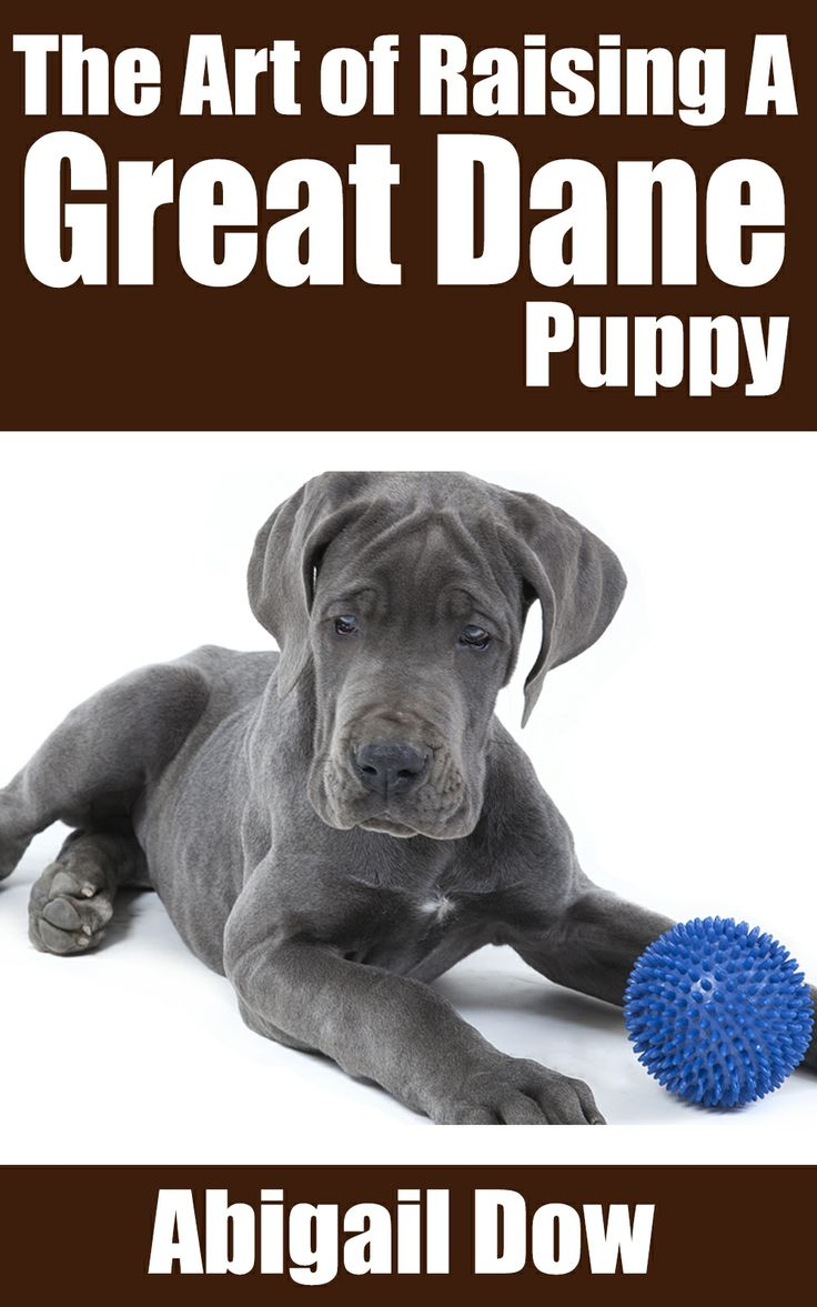 12 best great danes images on pinterest great danes puppies and the art of raising a great dane puppy from puppyhood to adult dog the art of raising puppies from puppyhood to adult dog geenschuldenfo Image collections