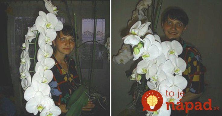 Z obyčajnej orchidey z obchodu vypestovala túto nádheru: Stačilo, aby urobila tieto 2 základné veci!