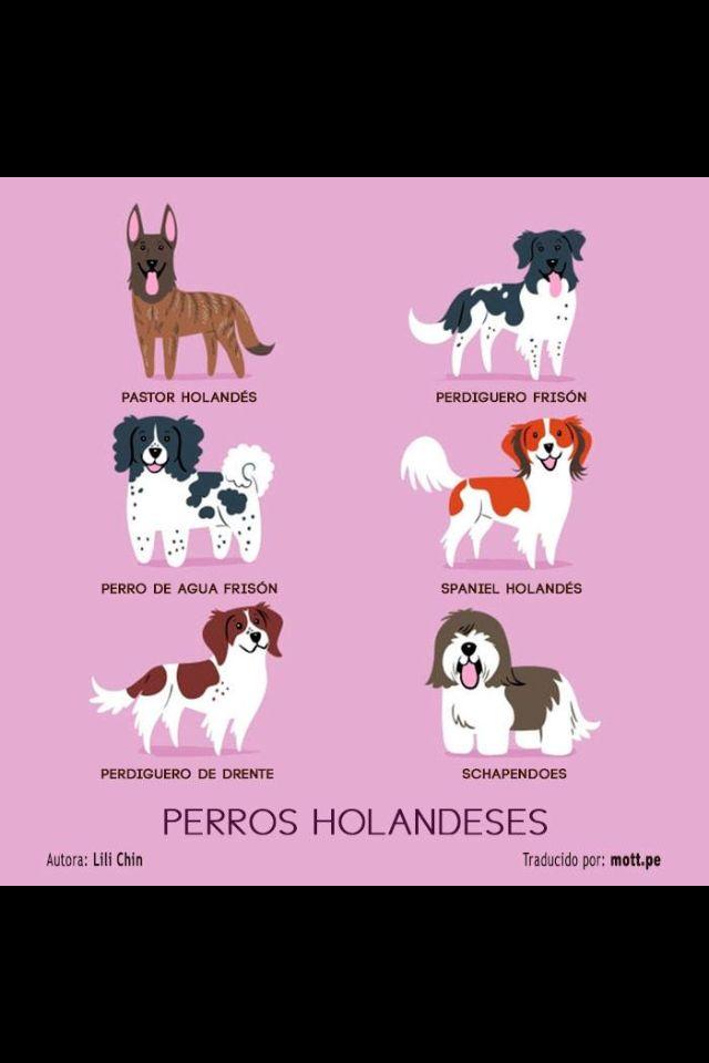 Perros Holandeses