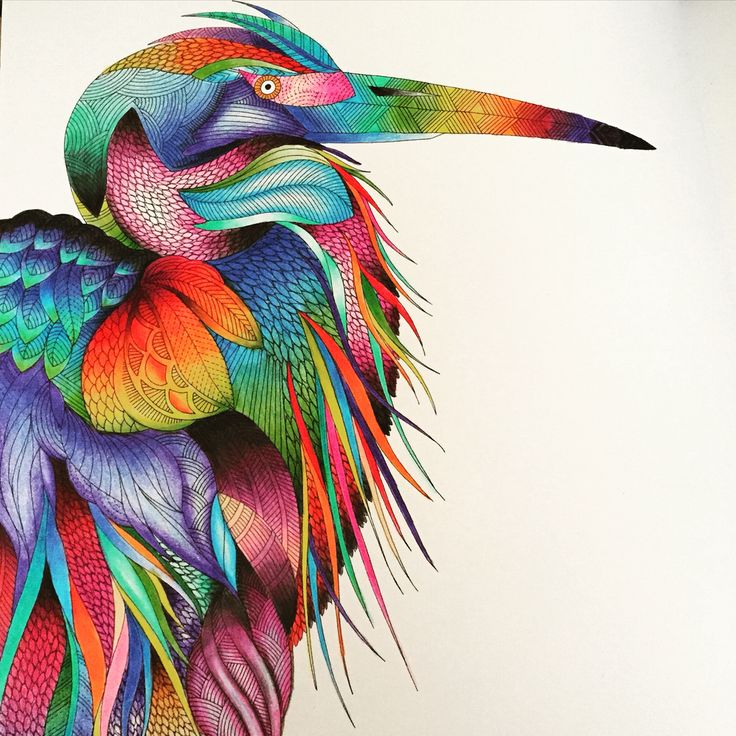 Completed From The Millie Marotta Animal Kingdom Colouring Book Meesharose
