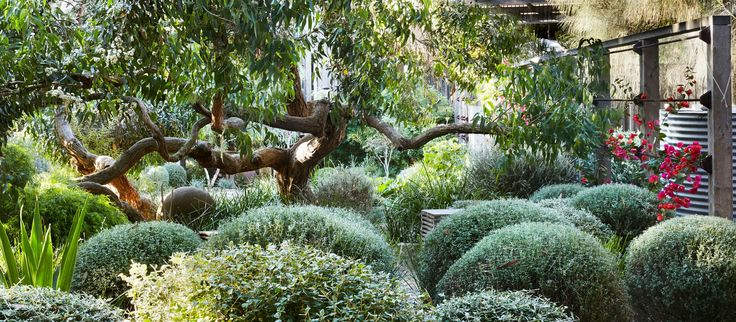 Take a trip to a striking and sculptural coastal garden with us.