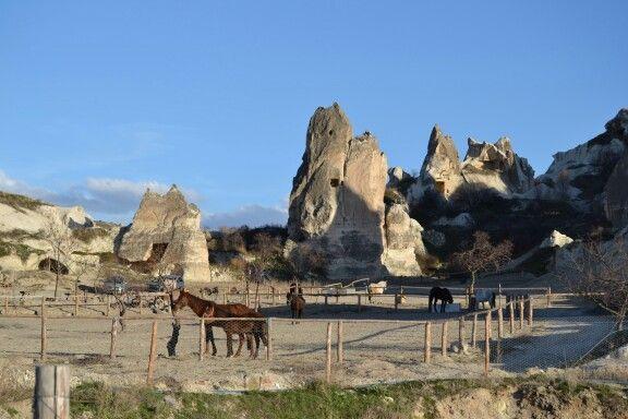 Horses in Kappedokia,  Turkey