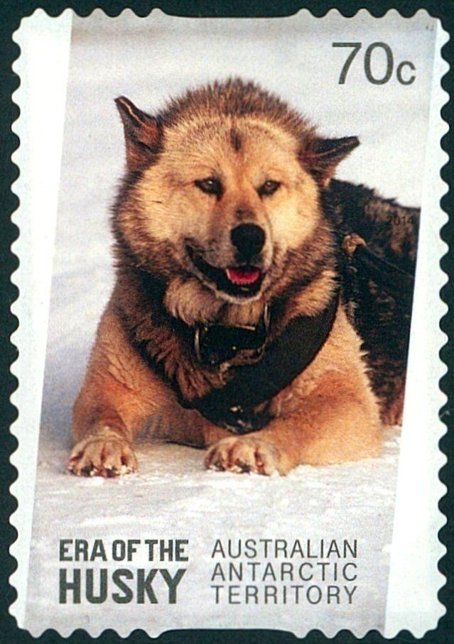 Stamp: Brown Husky (Canis lupus familiaris) (Australian Antarctic Territory (AAT)) (Era of the husky) Mi:AQ 227,Yt:AQ 224,Sg:AQ 247