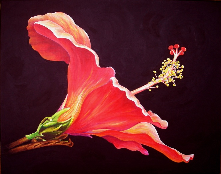 14 best hibiscus images on pinterest botanical art botanical hibiscus ccuart Image collections