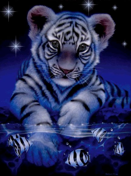 gif tiger images | Weisse Tiger