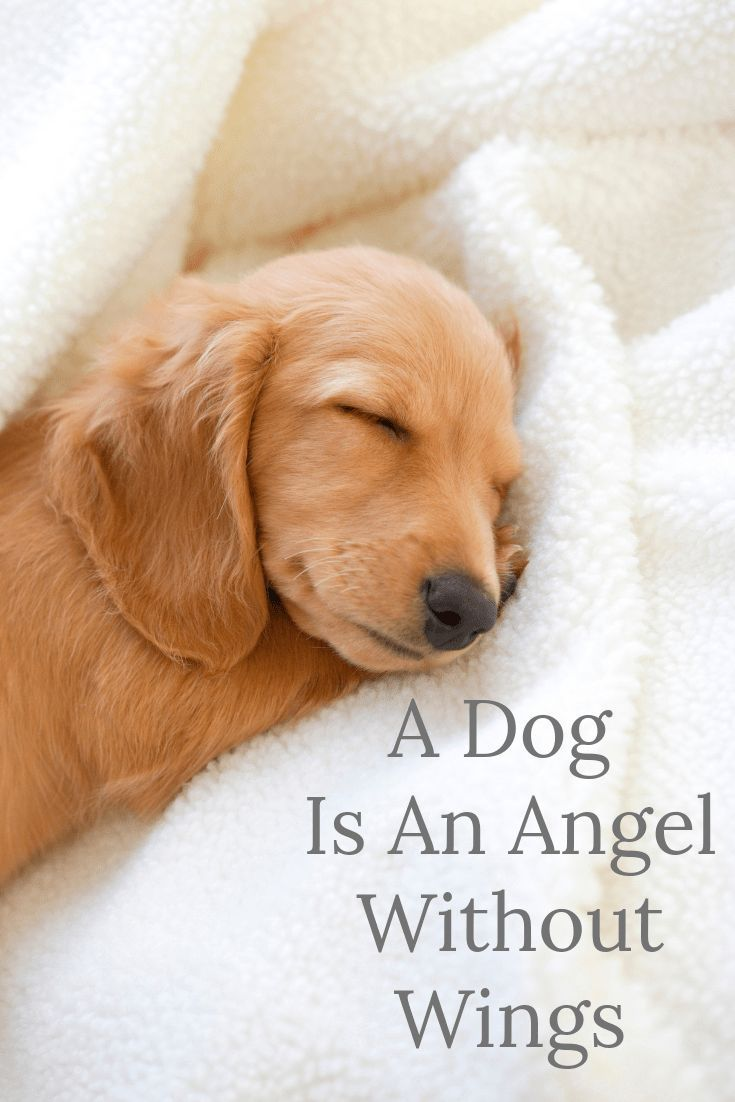 A Dog Is An Angel Without Wings Just Some Doggy Chat Dog