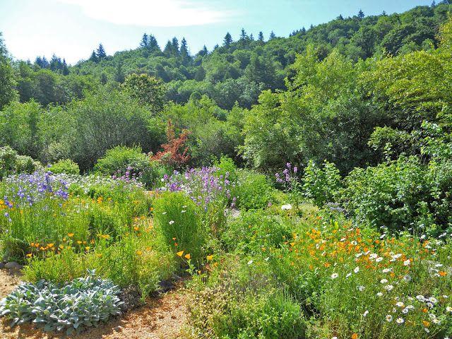 Édenteremtő: Permakultúra és Erdőkert