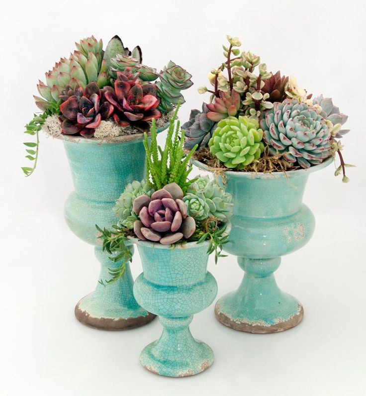 succulents planted in urns