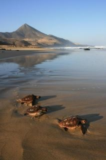 Nature life on Fuerteventura