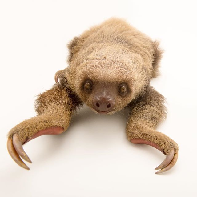 """Image by @joelsartore 