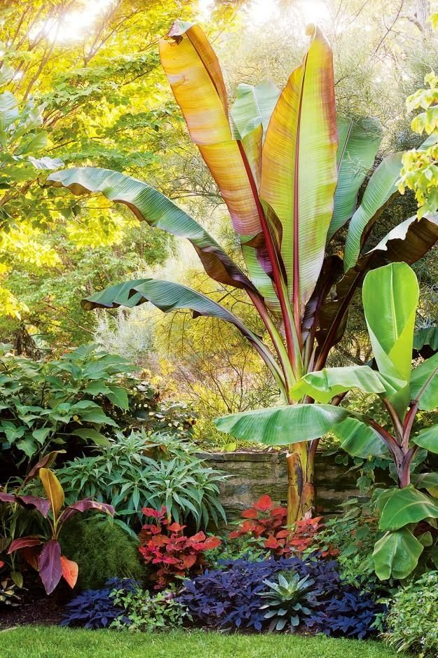 tropical garden - dirtbin designs