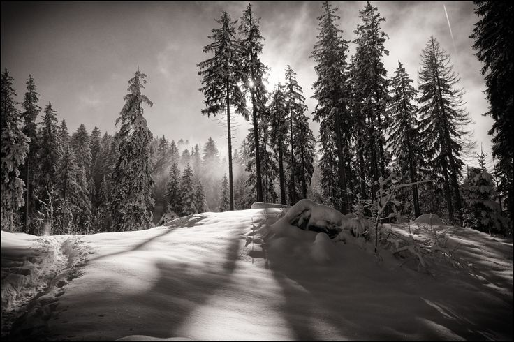 https://flic.kr/p/iLPJjP | winter has pros | a snowshoe tour made in heaven...