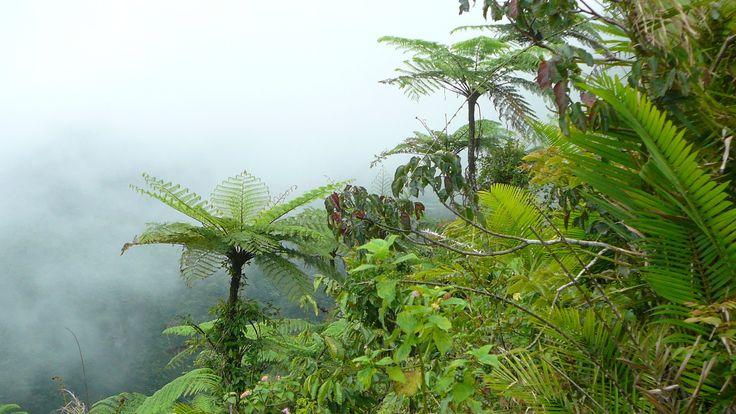 Výlety na Bali. Lempuyang výstup džunglí. Ostrov Bali. Dovolená na Bali.
