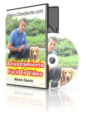 Adiestramiento Canino Fácil Ebook – BONOS « Adiestramiento Canino