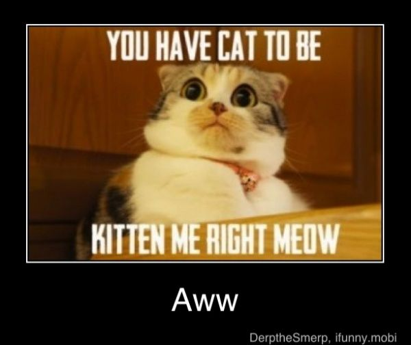 Funny Cat Memes, Laugh, Crazy Cat, Funny Stuff, Big Eye, Kittens, Funny Animal, So Funny, Cat Lady