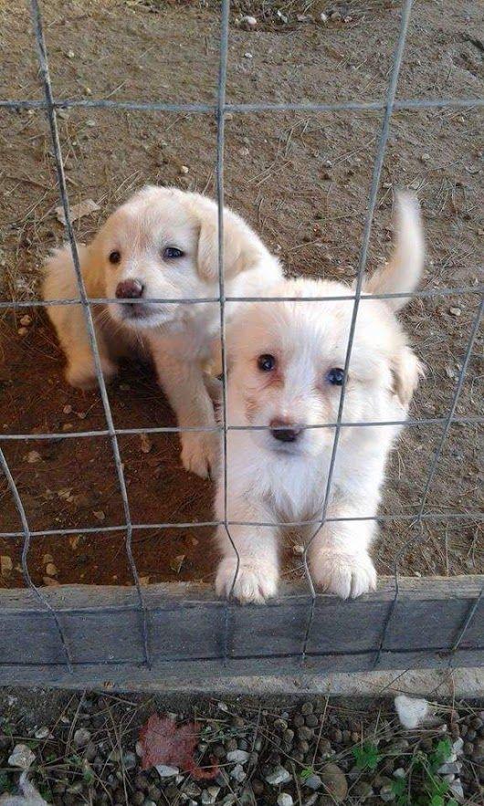queste cagnoline sono gemelline cercano casa ......