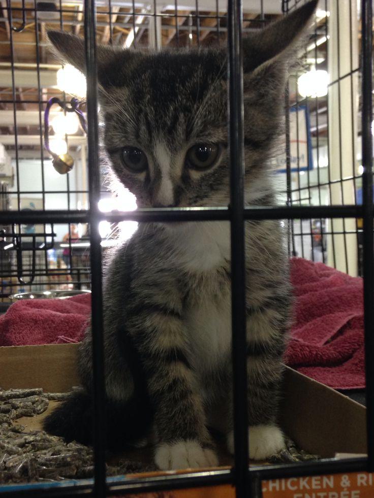 Adopt me at the Jacksonville Mega adoption jaxmega