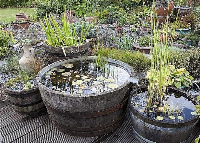 Créer un mini bassin - Choisir un contenant - Pour obtenir une eau claire mettre une pompe. Ce brassage de l'eau associé à la présence de plantes filtrantes et oxygénantes et de quelques poissons suffisent à maintenir naturellement une eau limpide.