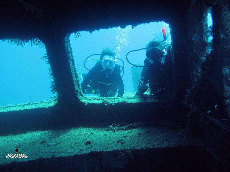 #Diving_Hurghada http://www.divingforever.com Phone: (+20) 1111211804 (call us on Viber or What's App) E-Mail: divingforever_hurghada@yahoo.com Our diving center offers diving trips - diving course - snorkeling - dolphin house - sea trips - and a lot of more. Feel free to contact us anytime! #Sweden #Switzerland #holiday #poland #taucher #tauchen #diving #scubadiving #plongee #hurghada #Egypt #Ägypten #redsea #divingredsea #divingegypt #Deutschland #Österreich #saudiarabia #kuwait #bahrain…