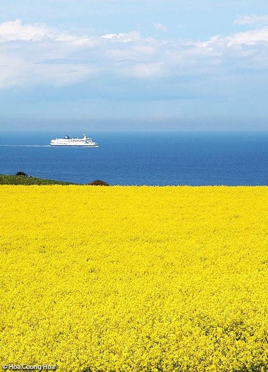 Parfaite symétrie de couleurs... Cap Blanc Nez (Pas de Calais, Pays du Boulonnais)