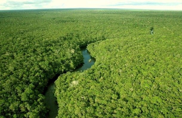 Amazon was recognized as one of the seven wonders of the world  in 2011. The Amazon River is the second longest in the world after the Nile (6,400 kilometers). It has over 1,100 tributaries, 17 of which are more than 1,500 kilometers.