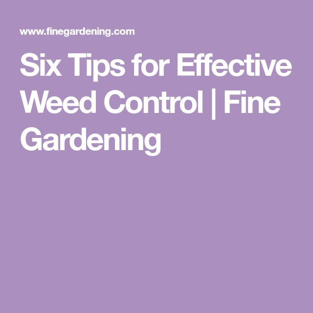 Six Tips for Effective Weed Control | Fine Gardening