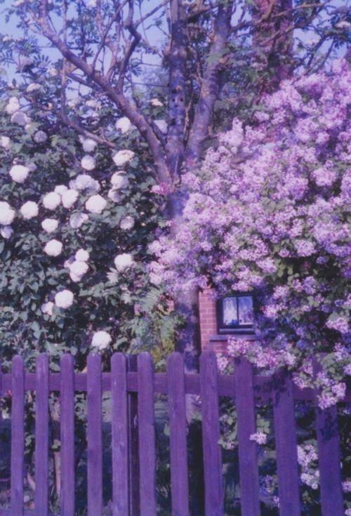 lavender love<3