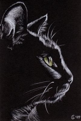 Black CAT Sunshine 4