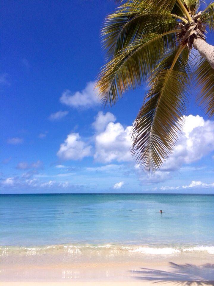 Saline Beach - French West Indies