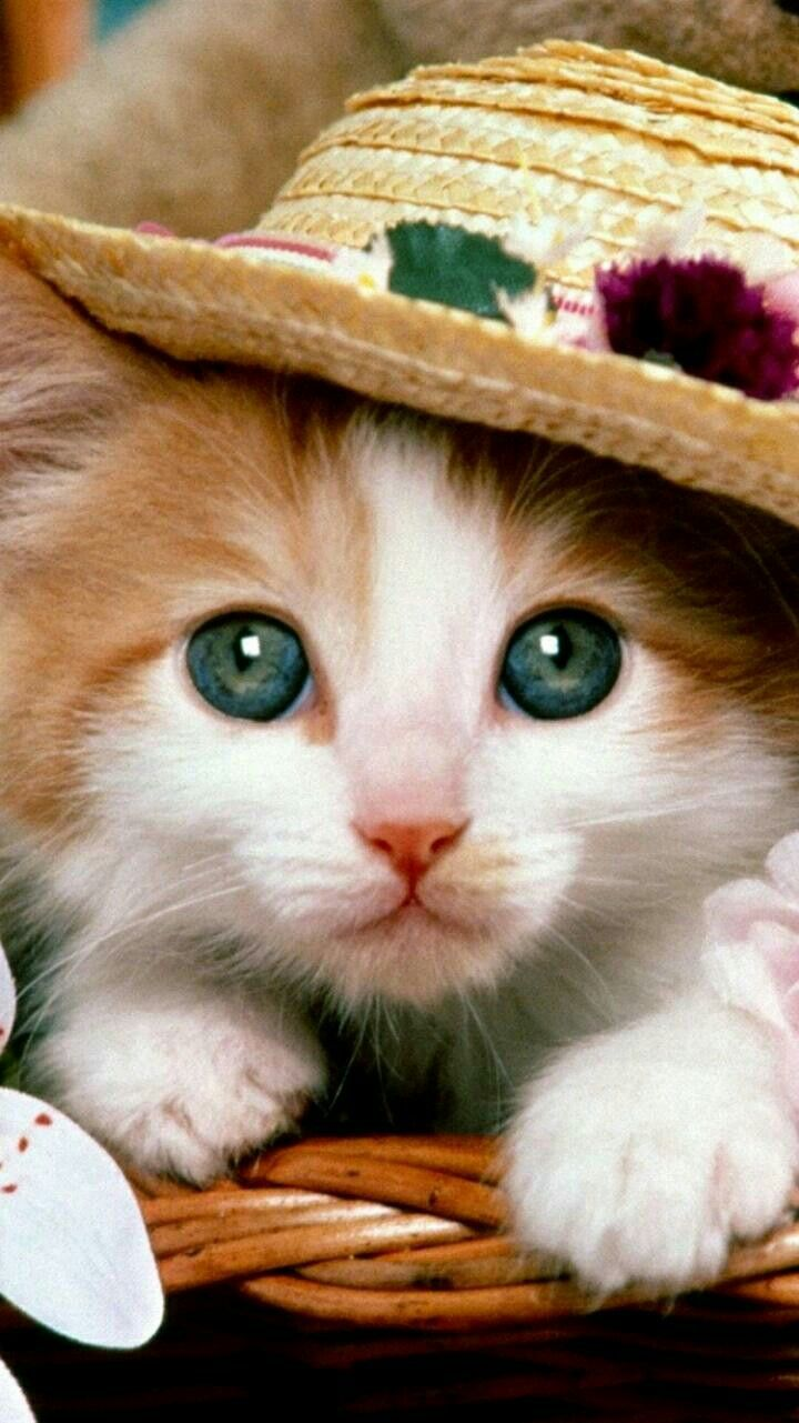 Pin By Noor Ul Ain On Wallpaper Cute Cats And Dogs Funny Cat Wallpaper Cute Cat Wallpaper