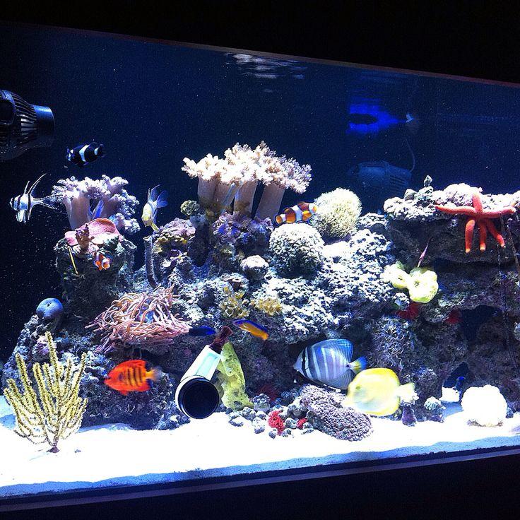 Mi acuario marino ,my reef