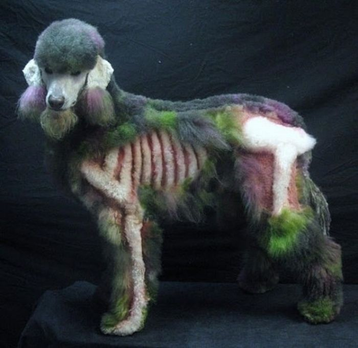 STRANGE DOG GROOMING AND DYE JOB - POODLE WITH BONES - PURPLE