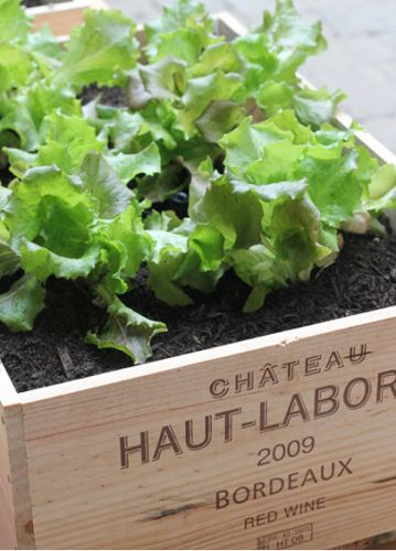Container gardening using wine boxes.