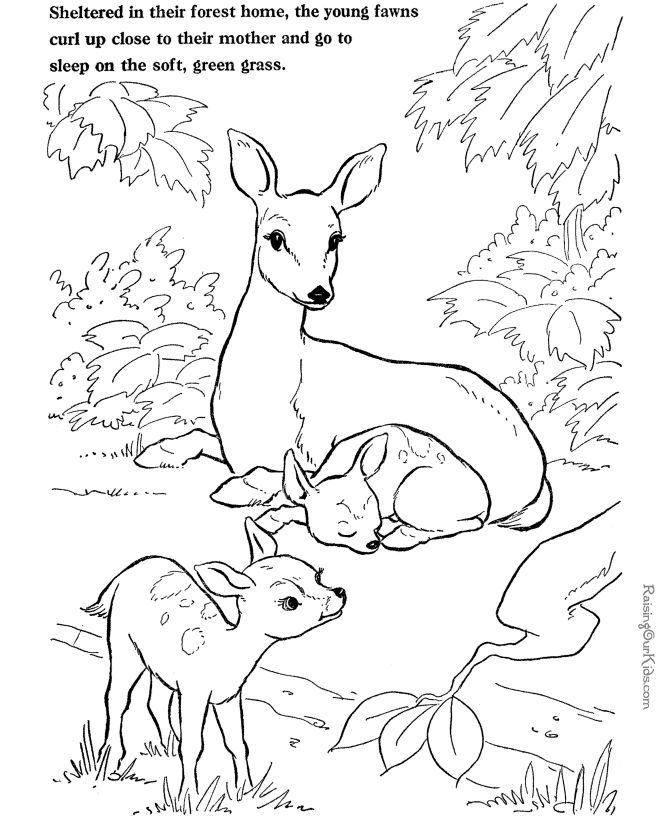 240 best Color: Animals images on Pinterest | Colouring book ...