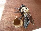 Dont kill those #Honey_bees get them removed.Visit:http://goo.gl/qgqgpx