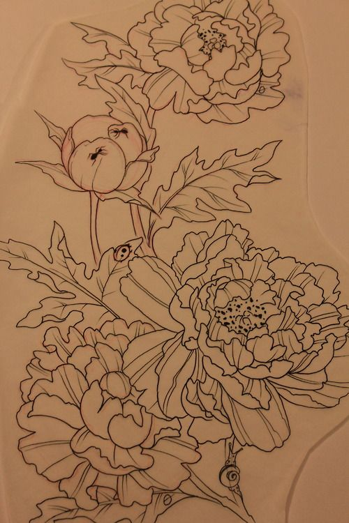 botanical drawing tattoo inspiration - peony with ants.... Love it minus the bugs tho