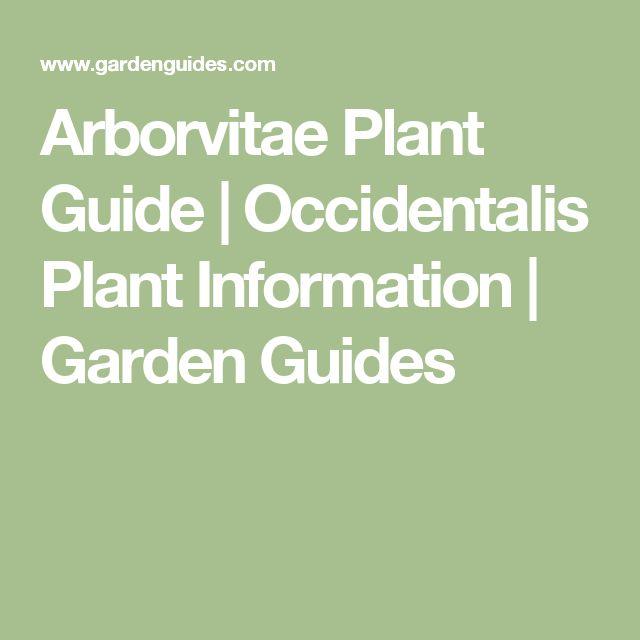 Arborvitae  Plant Guide | Occidentalis  Plant Information |  Garden Guides