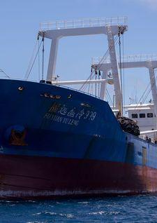 Barco chino capturado en Galápagos llevaba más de 6.000 tiburones - Telemetro