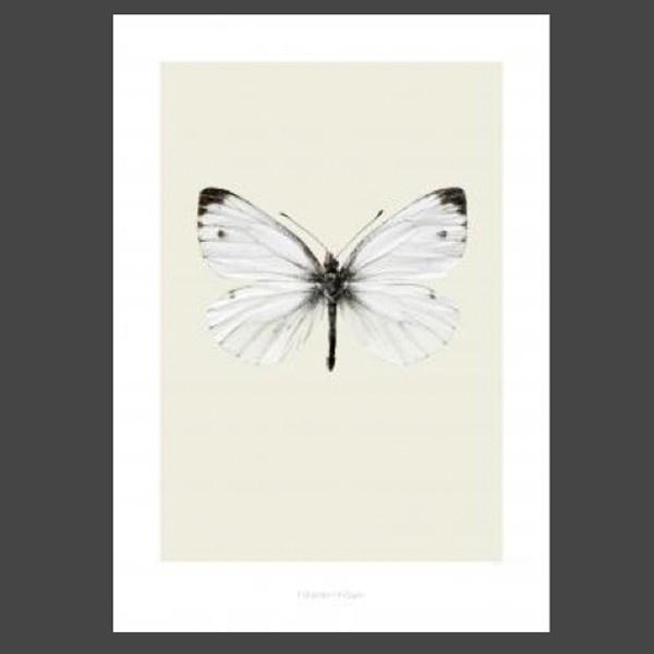 Tavlor från danska Hagedornhagen med motiv av en fjäril Pieris napi