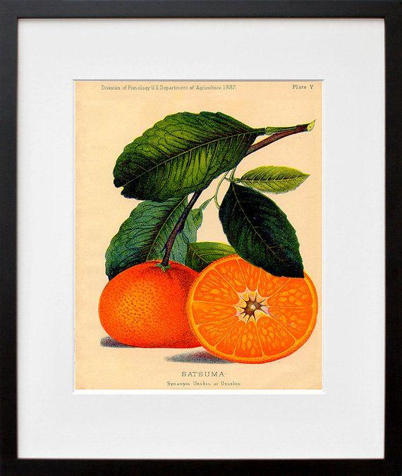 Best 25+ Orange kitchen walls ideas on Pinterest | Burnt ...
