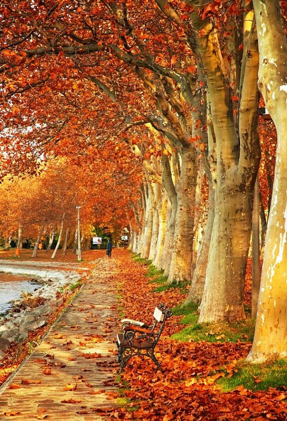 Balaton in autumn