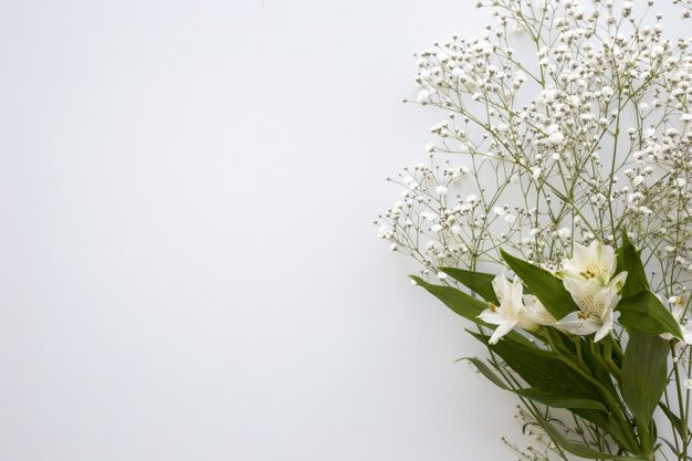 Download Top View Of Baby S Breath And White Lilies Flower Above White Background For Free In 2020 White Lily Flower Cherry Blossom Background White Lilies
