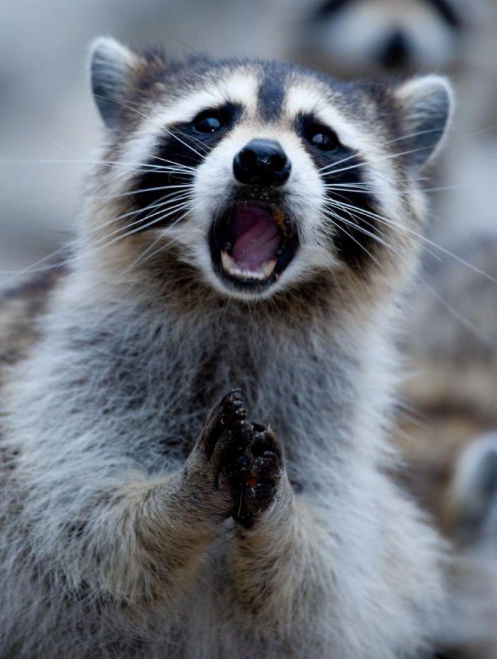 animais surpresos atonitos (23)