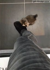 Kitty climbing a human | Gif Finder – Find and Share funny animated gifs