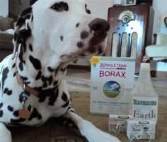All Natural Flea Treatment This really works! I've been doing this since I was pregnant with my now 4 yr old, haven't bought any chemical flea treatments since!