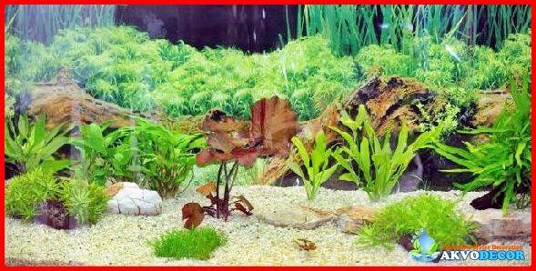 Pasir Laut Untuk Akuarium Air Tawar   Akuarium adalah suatu tempat yang dipakai untuk memelihara ikan yang biasanya jenis ikan hias yang mana wadahnya ini terbuat dari gelas atau kaca. Akuarium biasanya memiliki banyak sekali faktor penting sebagai konten didalamnya nanti.  Selengkapnya: http://akvodecor.com/pasir-laut-untuk-akuarium-air-tawar-tidak-bagus/