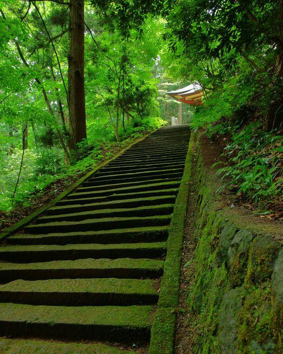 Kinpou Shrine, Akita, Japan  秋田県金峰神社 #緑 #Green