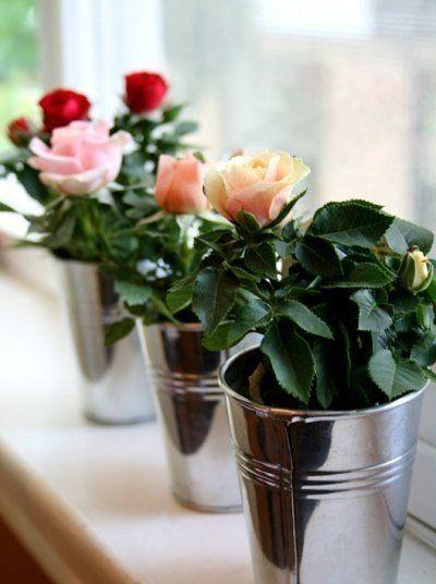 Квартирный Вопрос     Как вырастить розу из срезанного цветкаМногие, кому дарили букет из , замечали, что через несколько дней на стеблях появлялись свежие побеги. Конечно, первая мысль – дать …