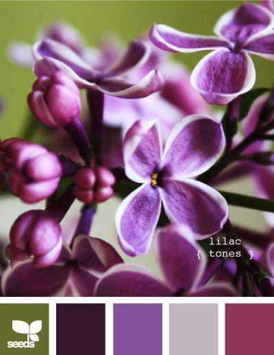 lilac tones: Colour, Color Palettes, Design Seeds, Colors, Lilacs, Lilactones